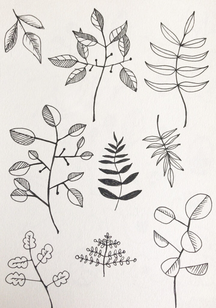 leaf sketches